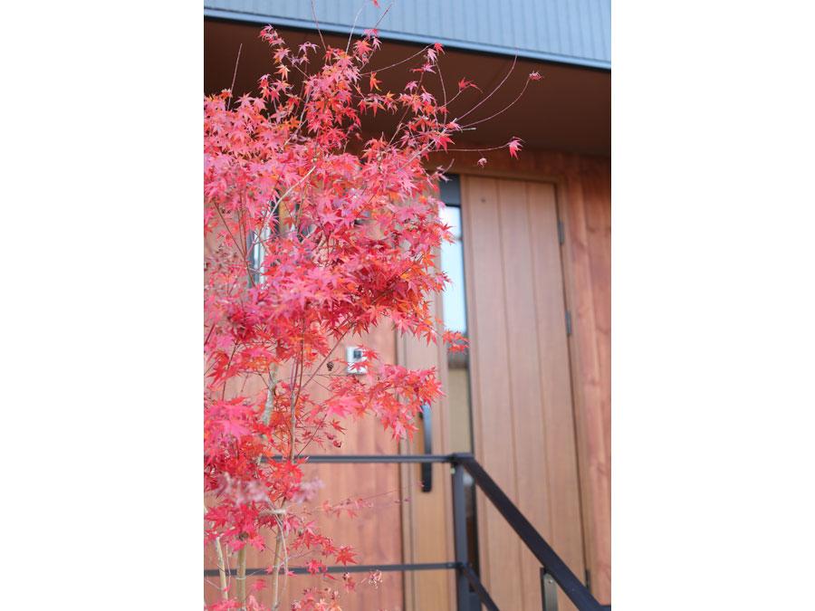 秋になればシンボルツリーのモミジが朱色に染まって美しく彩る。