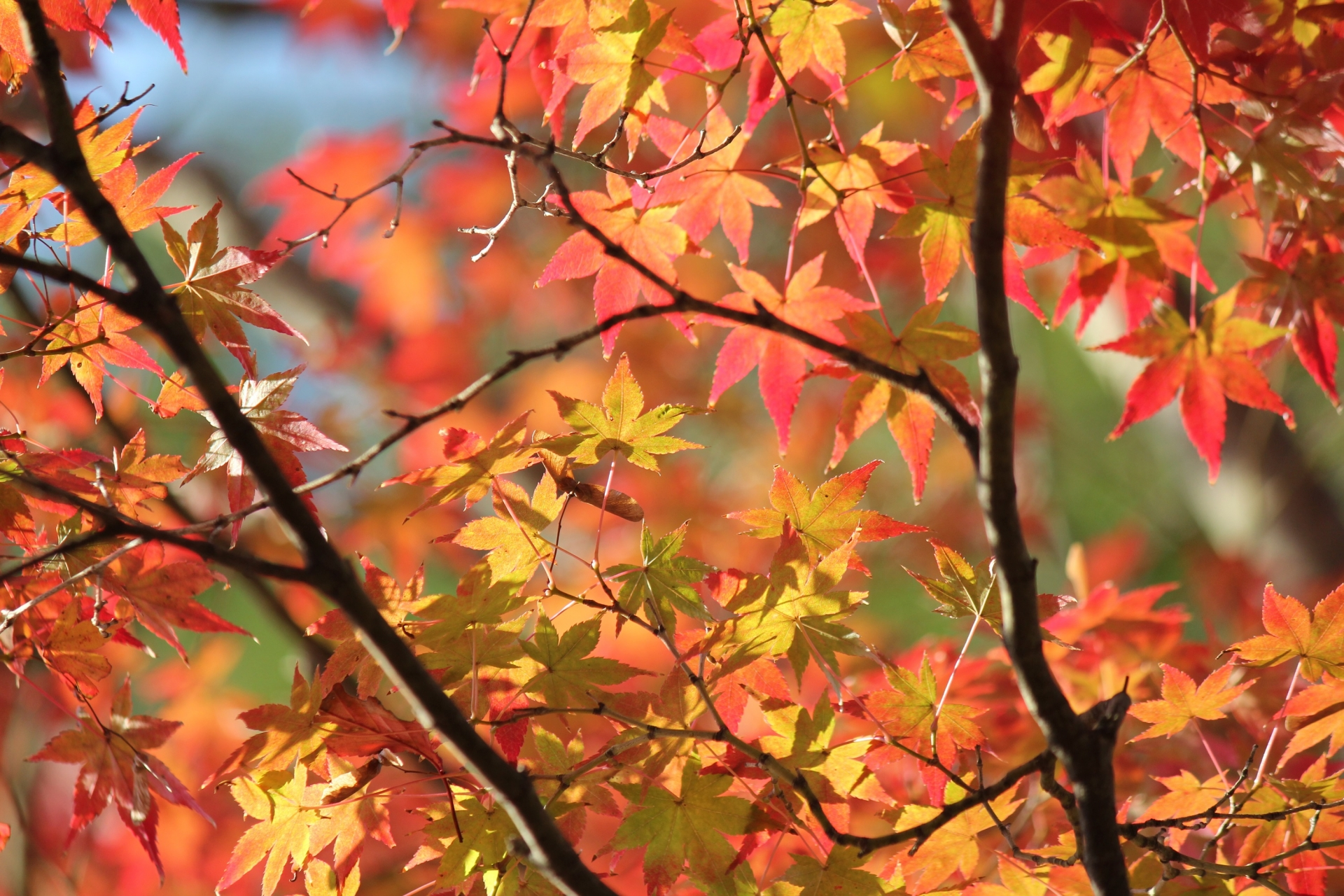 シンボルツリー 福知山